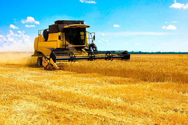 Australian Grains Industry