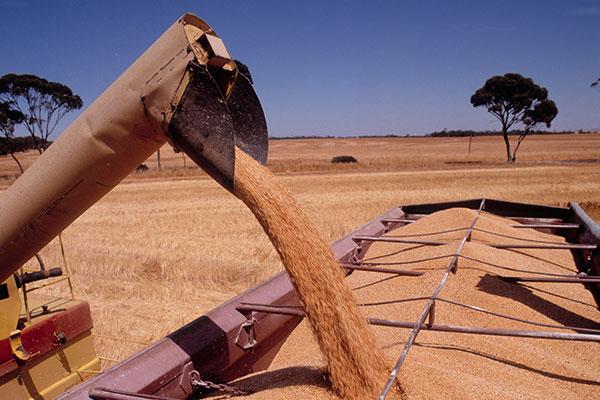 Australian Grain Industry
