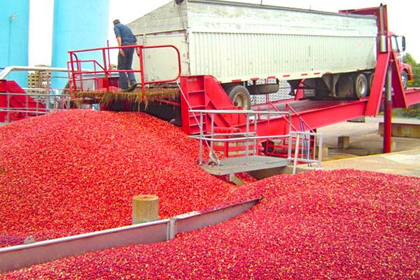 Industry economy of produce