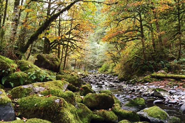 Beautiful creek in Oregon.