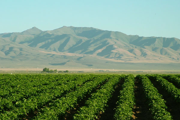 Agriculture in Winnemucca