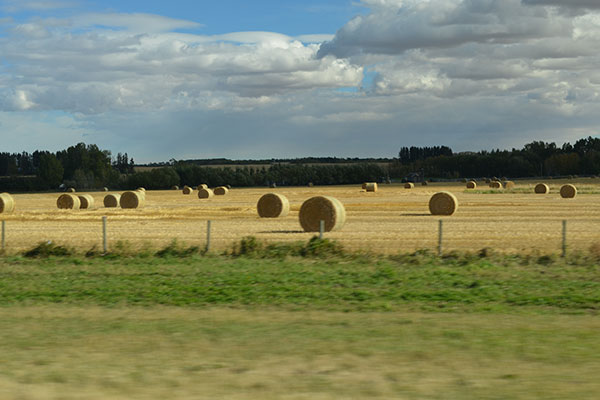 Hay field in Alberta, Canada - Volunteer Alberta - Community Engagement